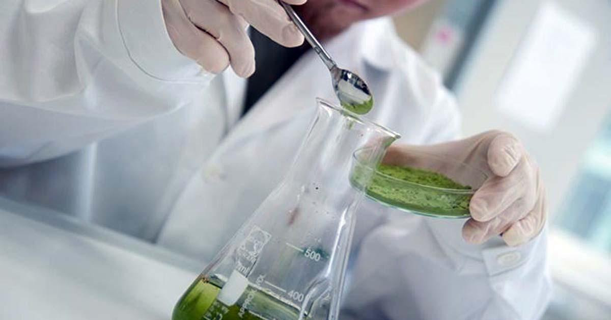 Resveratrol and Cinnamaldehyde: Potential natural Phytogenic additives