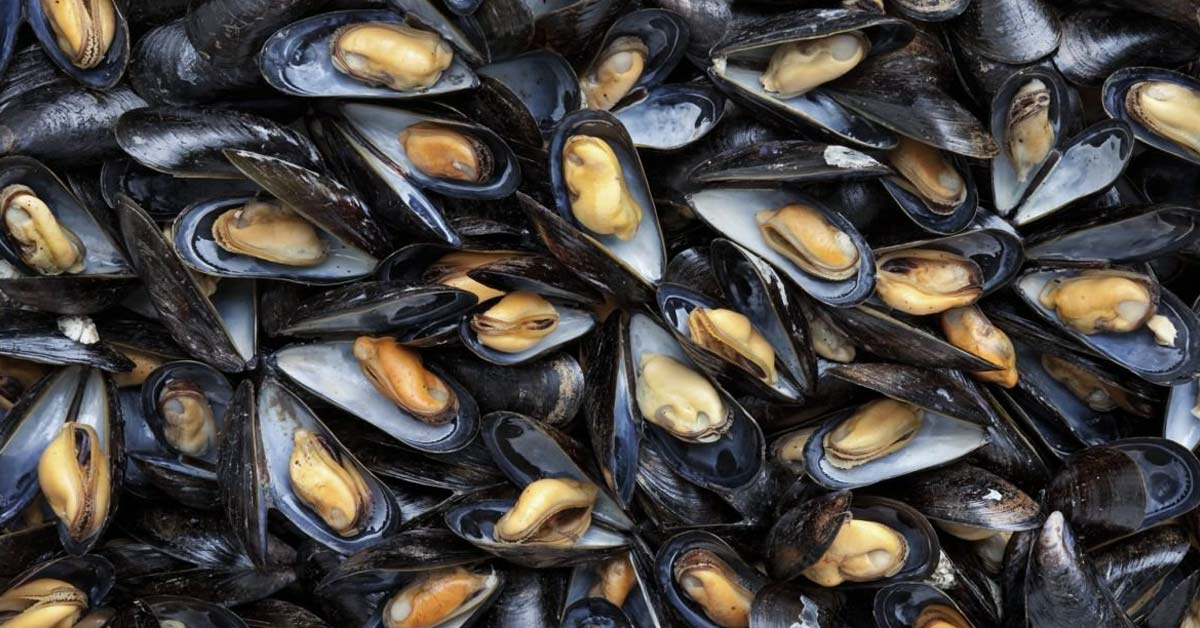 Condition of Green Mussel's Gonads Can Point to The Levels of Heavy Metals in The Water
